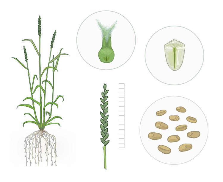 Presentation slide © Flozbox/science.illustrated