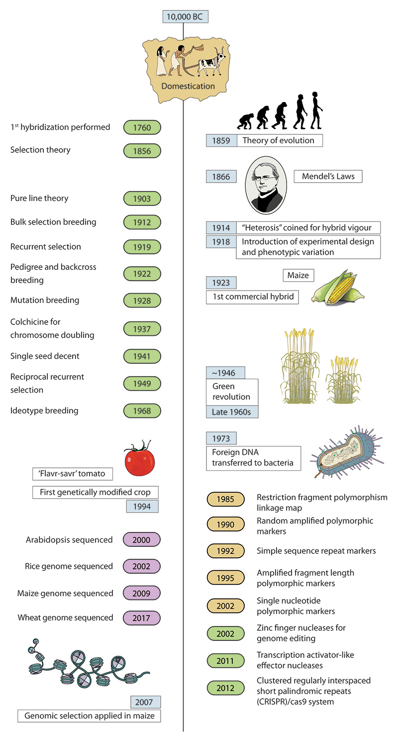 Figure 1. Timeline of key plant breeding techniques and technologies © Flozbox/science.illustrated