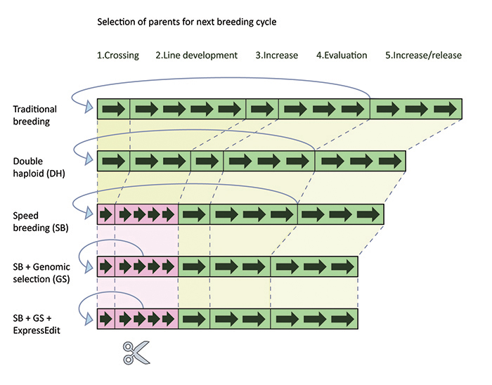 A schematic timescale comparing the length of breeding cycles using various different methods