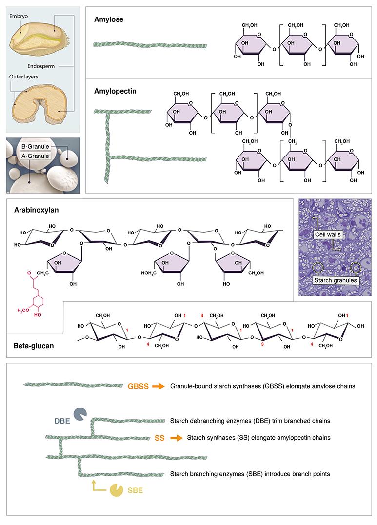 Biochemist_S1a
